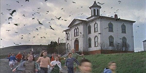 the-birds.jpgw640