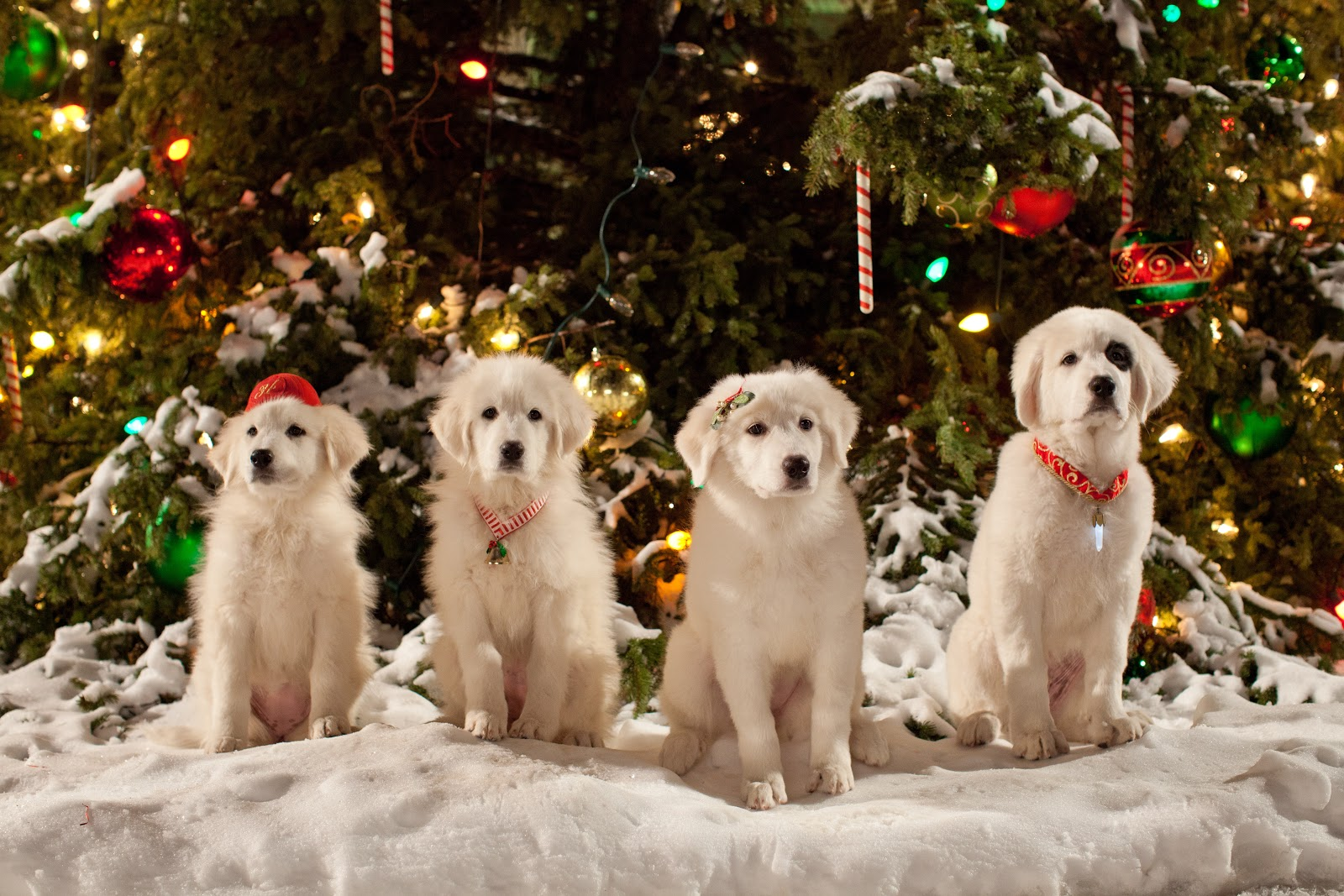 'Cinderella' and 'Santa Paws 2' direct-to-DVD releases for the die-hard princess and dog lovers only