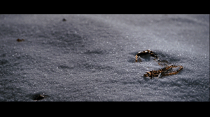 Vesper's Necklace in the snow at the end of Quantum of Solace