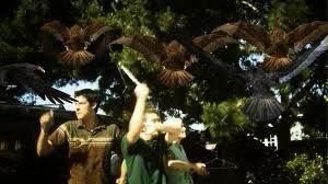 Birdemic - Birds (1)