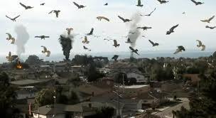 Birdemic - Birds (2)