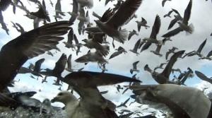 leviathan-movie-2012-tiff