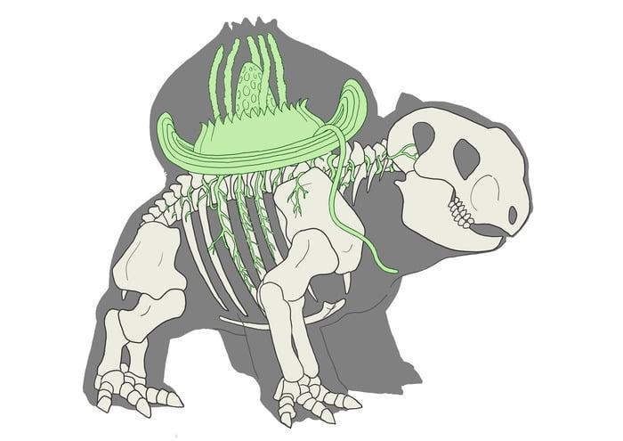 Bulbasaur Skeleton
