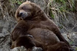 Bears-Trailer