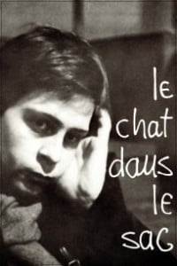 chat_dans_le_sac