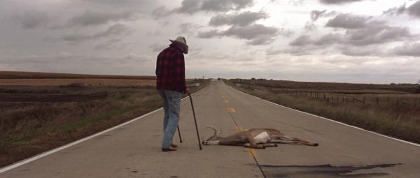 straight-story-deer