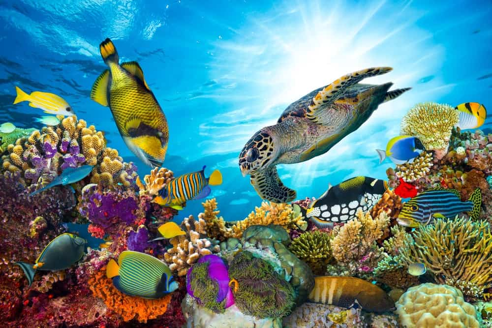 Top 10 Most Beautiful Coral Reefs in the World 10 Most Beautiful Coral Reefs World