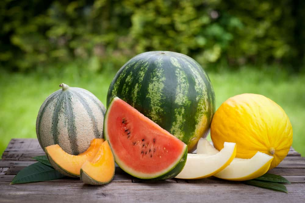 Collection of different types of melons on picnic table