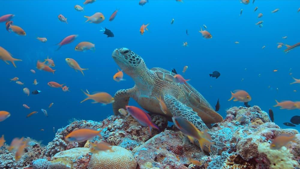 Tubattaha reef