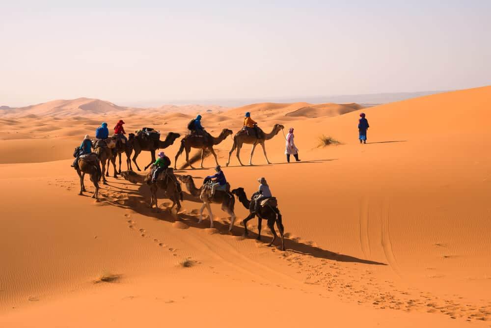 A Caravan in Sahara Desert.
