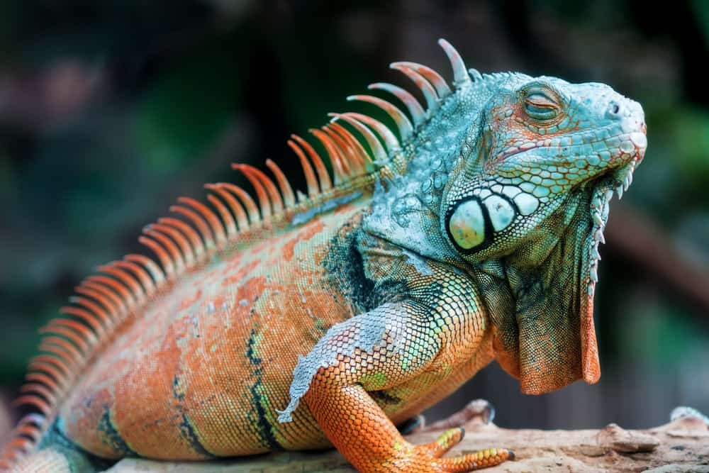 Exotic animals as an expensive hobby