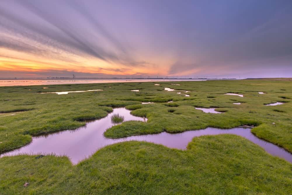 A bird's eye view of a tidal marsh.