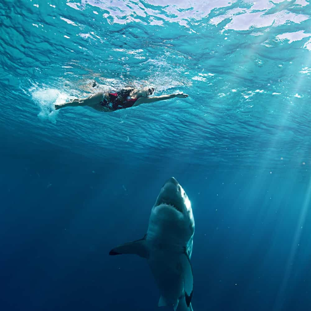Although your chances are only one in 11.5 million of being attacked by a shark, that is still more likely to happen than you winning a Powerball contest.