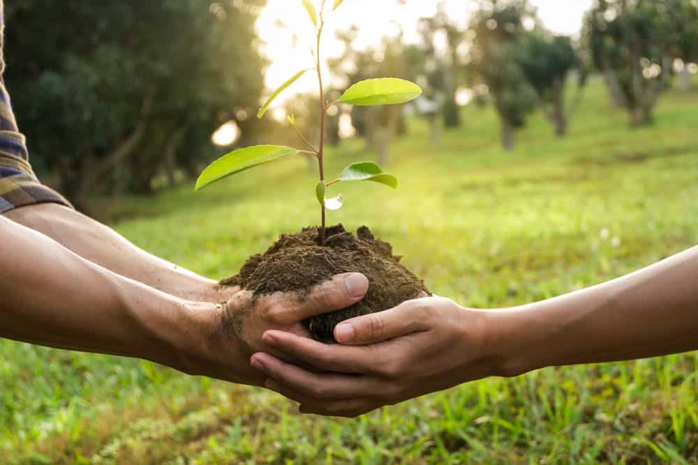 Couple planting tree sapling together