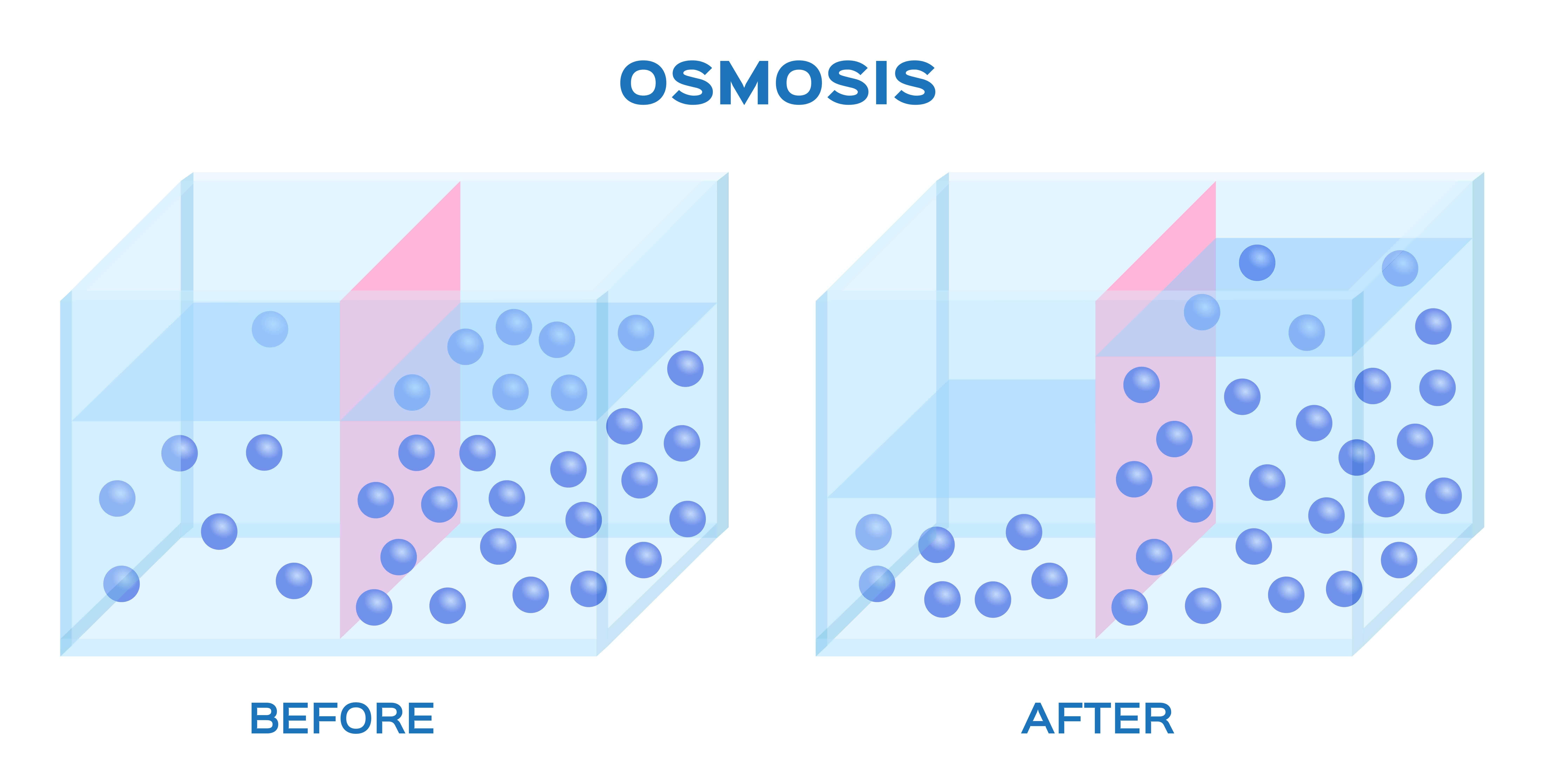 Illustration of Osmosis