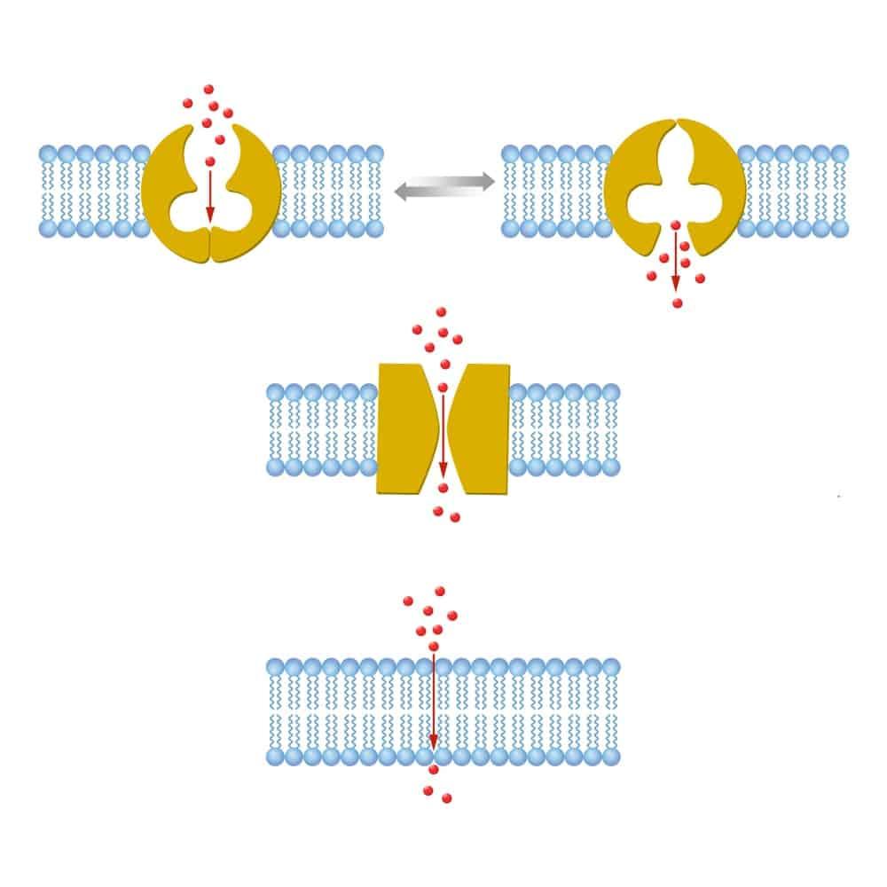 Illustration of Transport Membranes
