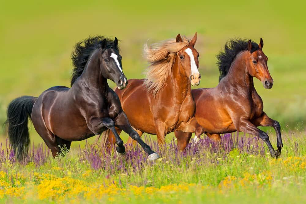 24 Types Of Horses Chart And Anatomy Illustration