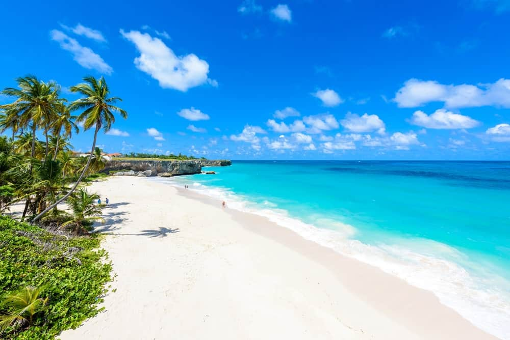 White sand and palm trees in Barbados beach.
