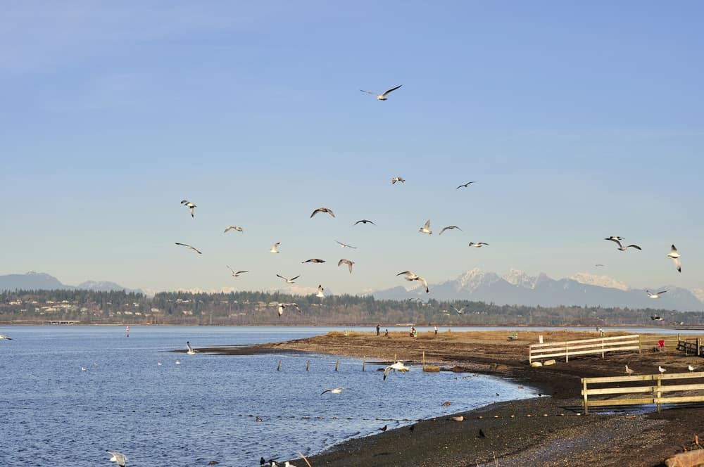 Blackie's Spit which is a beach peninsula at Crescent Beach in South Surrey, BC
