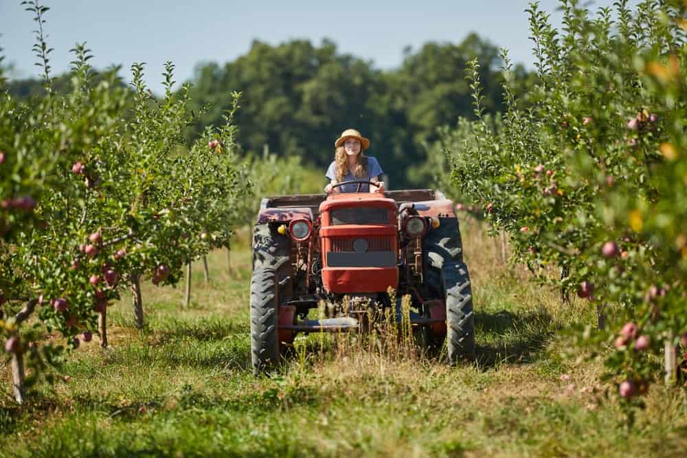 A woman drives a tractor through the orchard.
