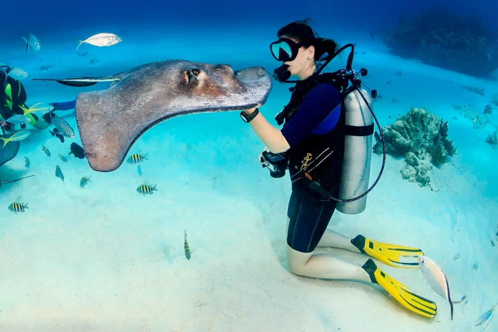 Scuba diver interacting with a stingray