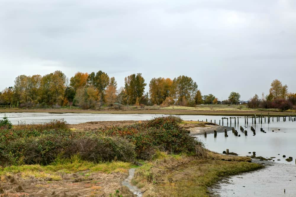 The wetlands area at Crescent Beach in South Surrey. Great walking trails around this wetland area. It's really cool.