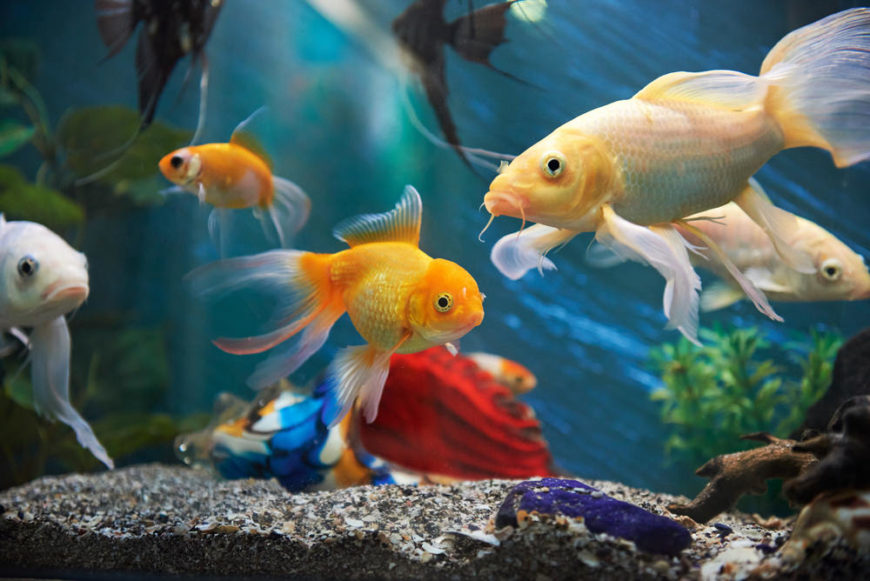 Aquarium with colorful fish