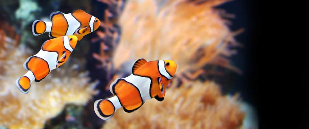 19 Of The Best Online Fish Stores For Aquarium Fish