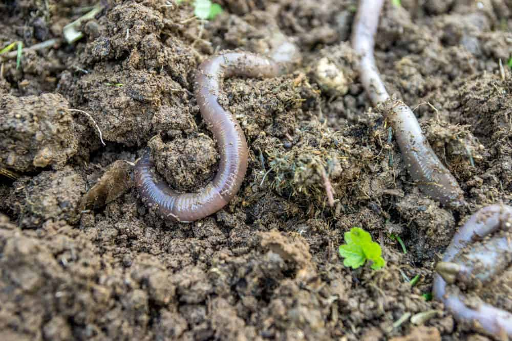 Earth worker worms