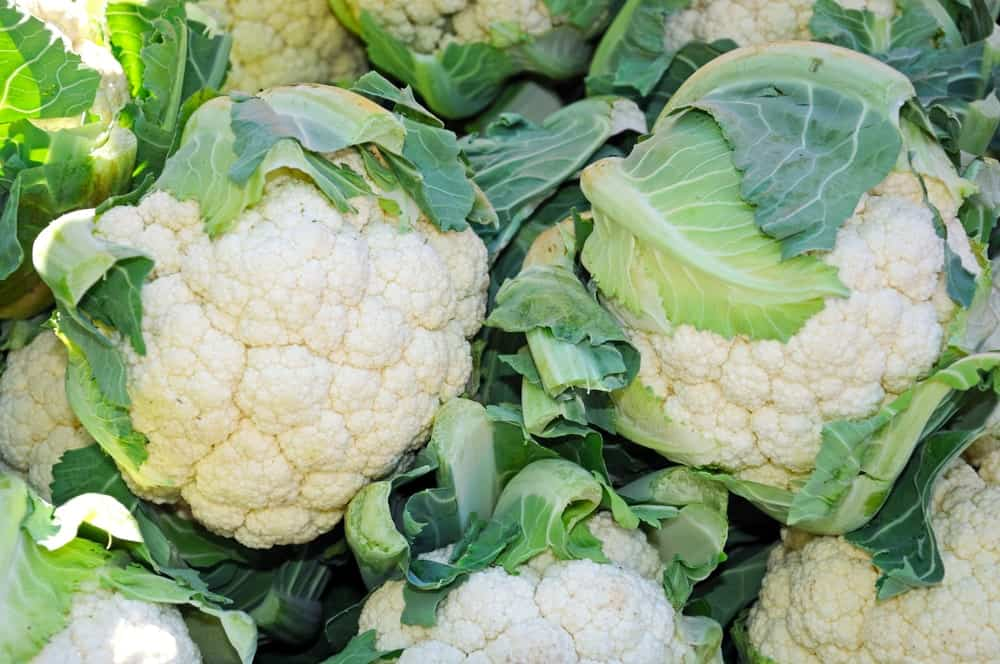 European Cauliflower