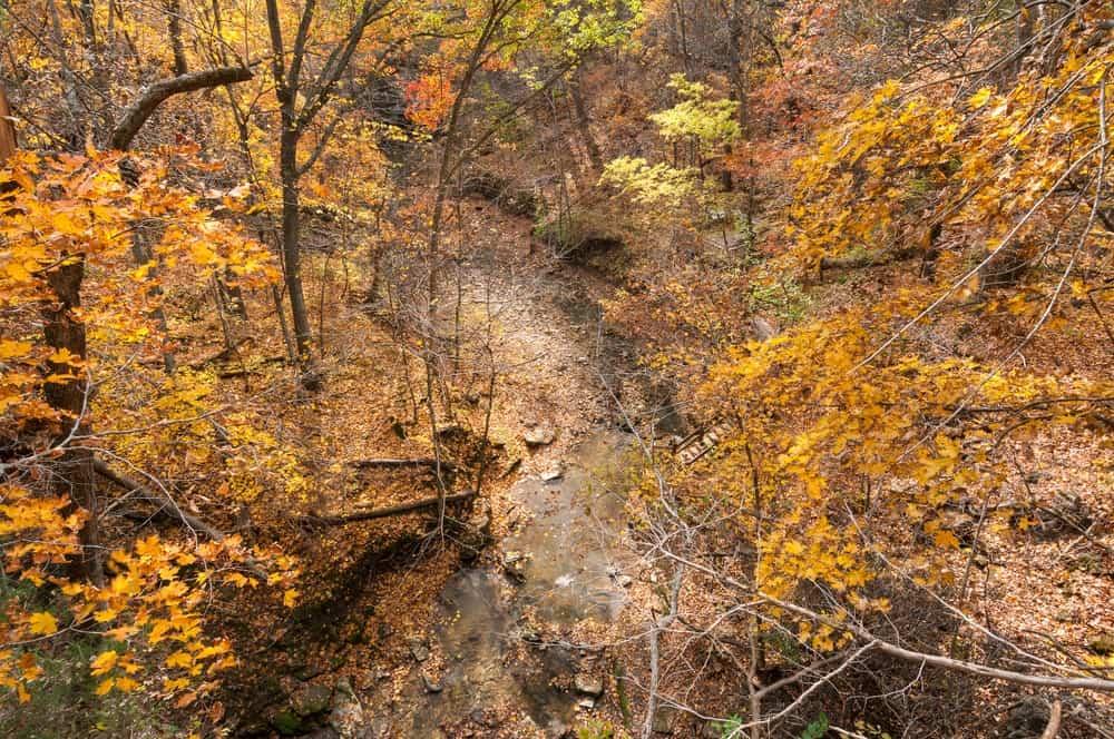 Intermittent stream at Rock Bridge State Park.