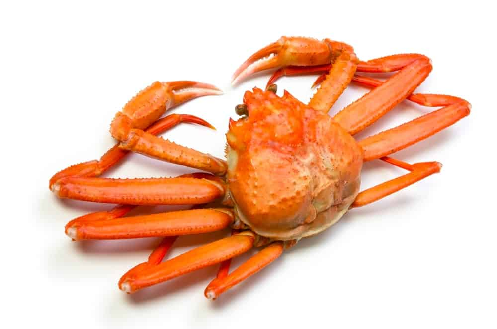 Rock (Snow) Crab