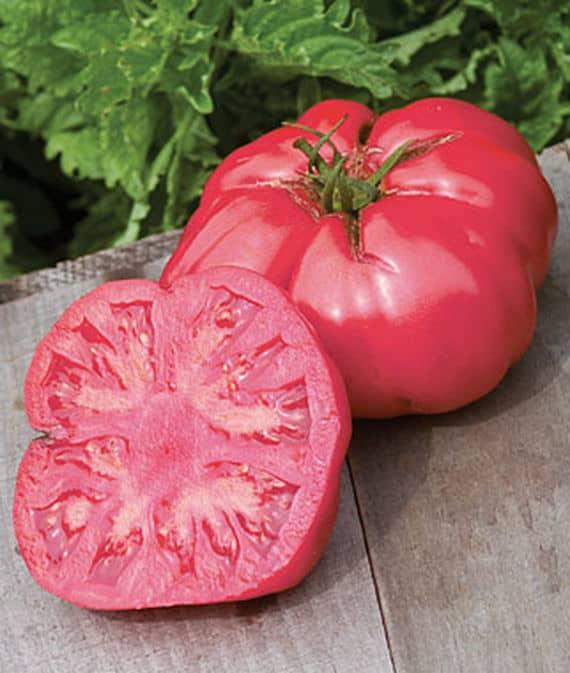 Caspian Pink Tomatoes