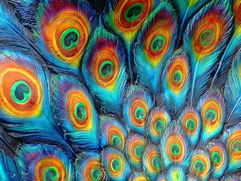 Colorful peacock feather pattern.