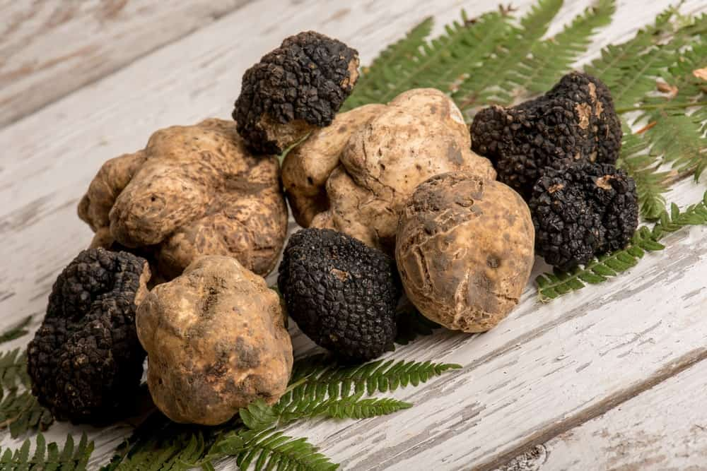 10 Different Types Of Truffles  Plus Fun Facts