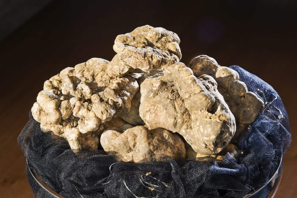 White Piedmont Truffle