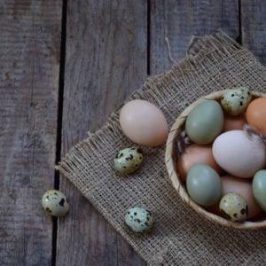 Delicious bird eggs you can eat