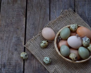 Delicious bird eggs you can eat