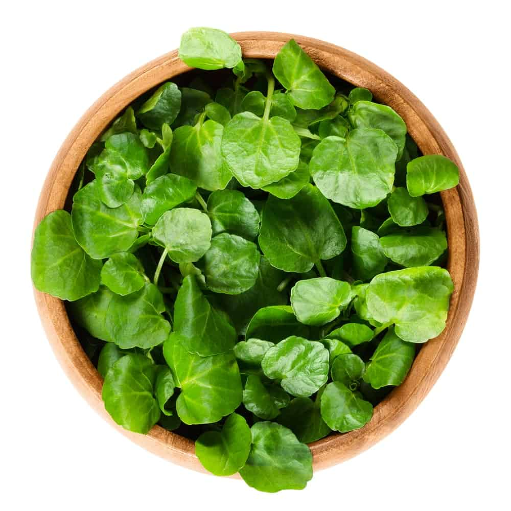 Fresh Watercress in a wooden bowl