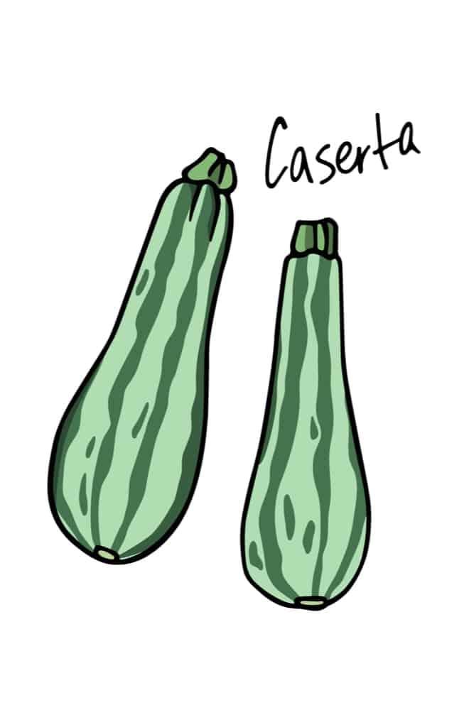 Caserta Zucchini