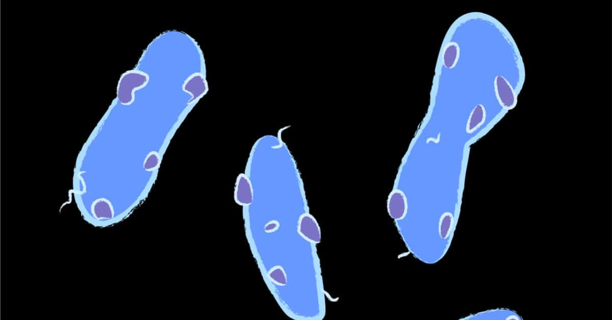Gemmatimonadetes