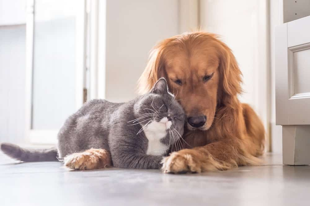 A cat and a dog leaning against each other.