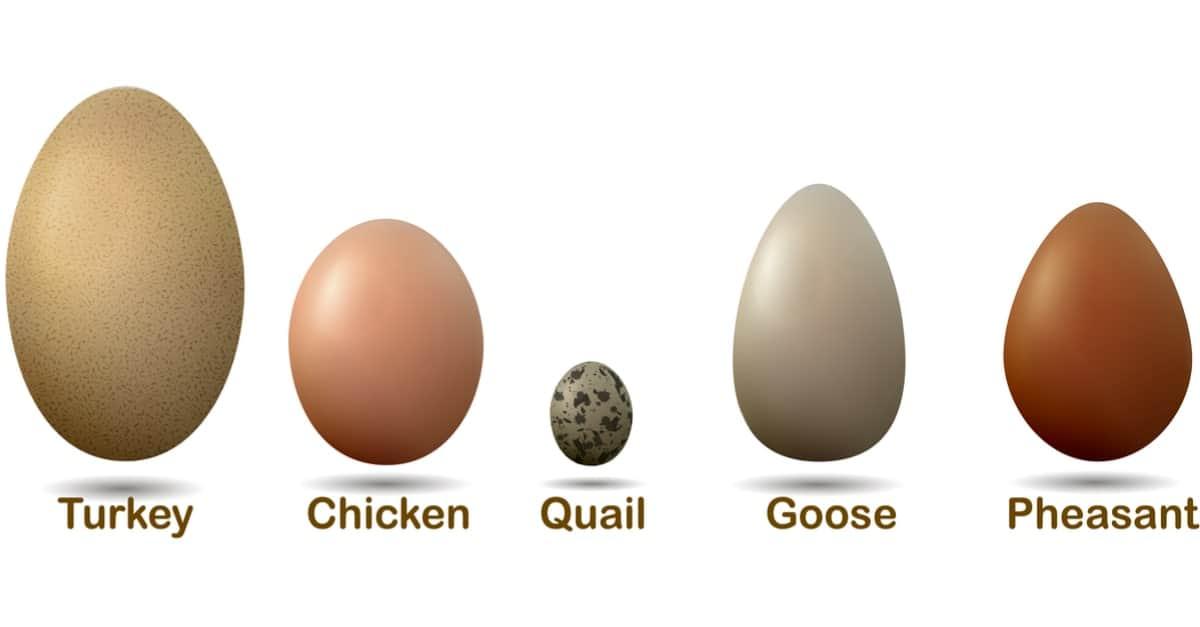 Types of Edible Bird Eggs