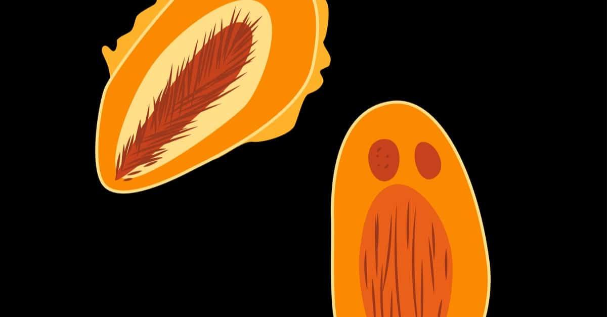 Verrucomicrobia