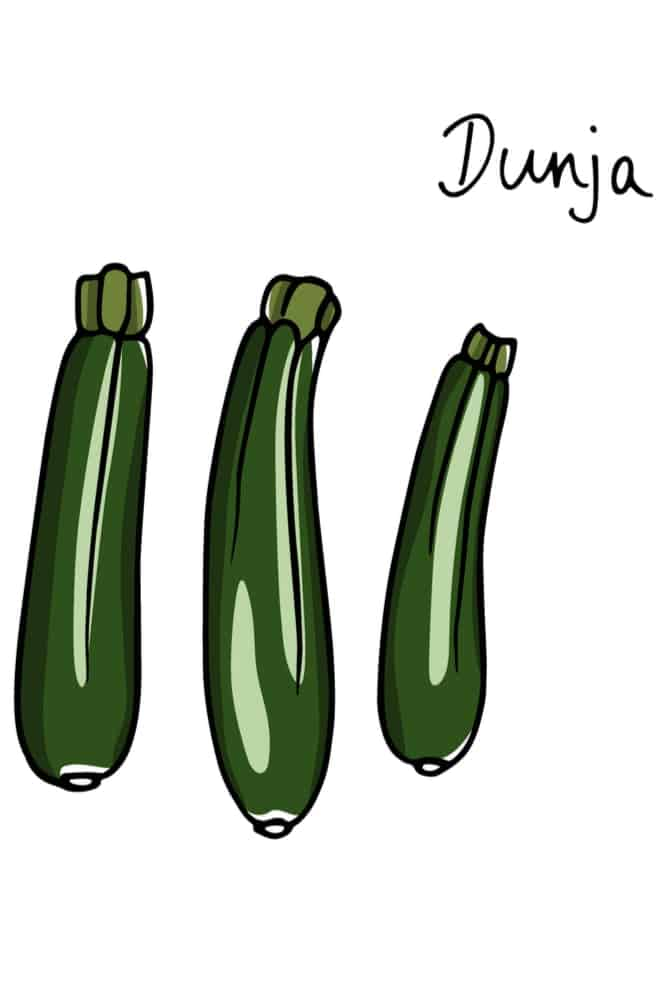 An Illustration of Dunja Zucchini