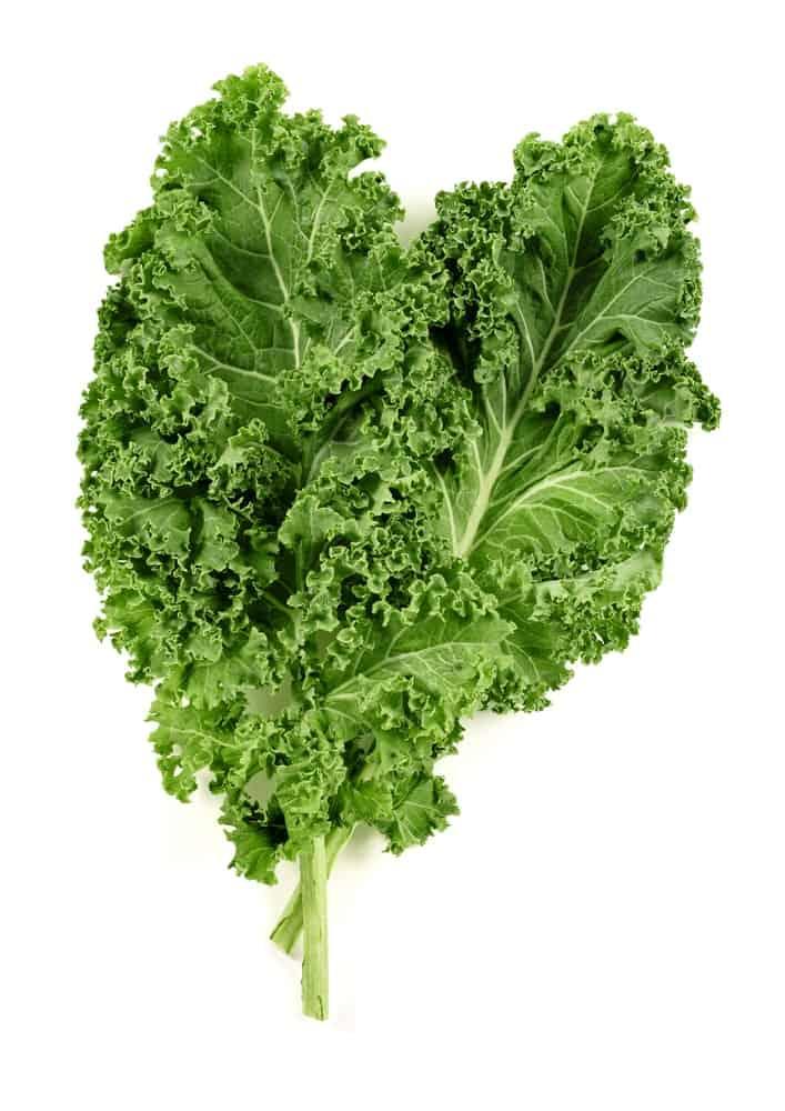 Fresh Dark Green-Hued Kale Leaves