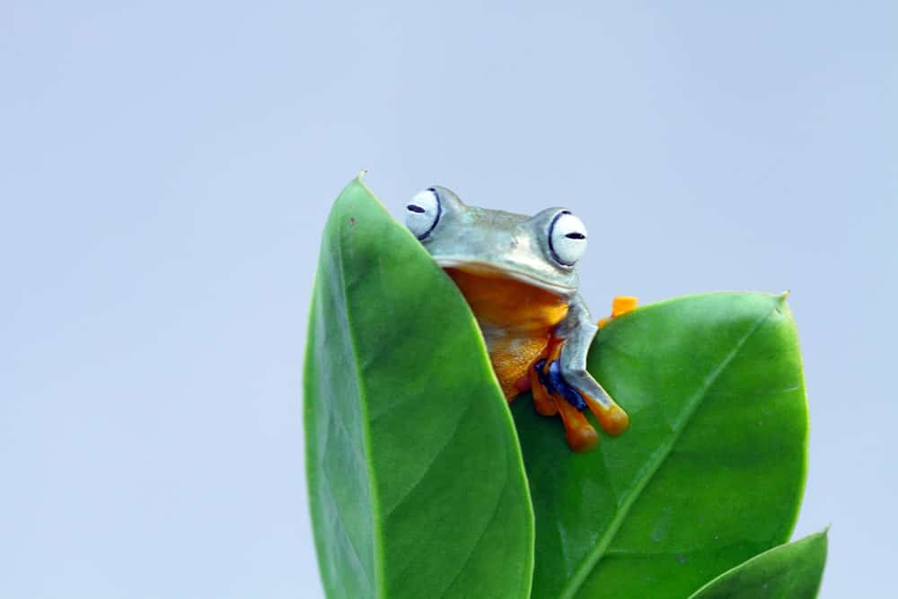 A Frog on Leaves