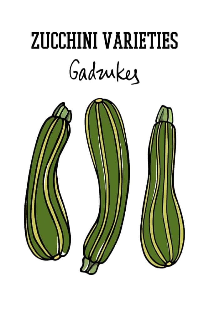 A Variety of Zucchini – Gadzukes