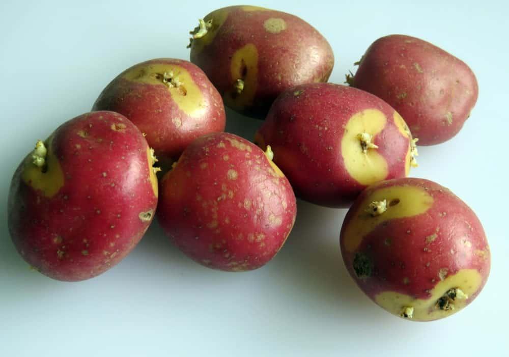 Apache Sweet Potatoes
