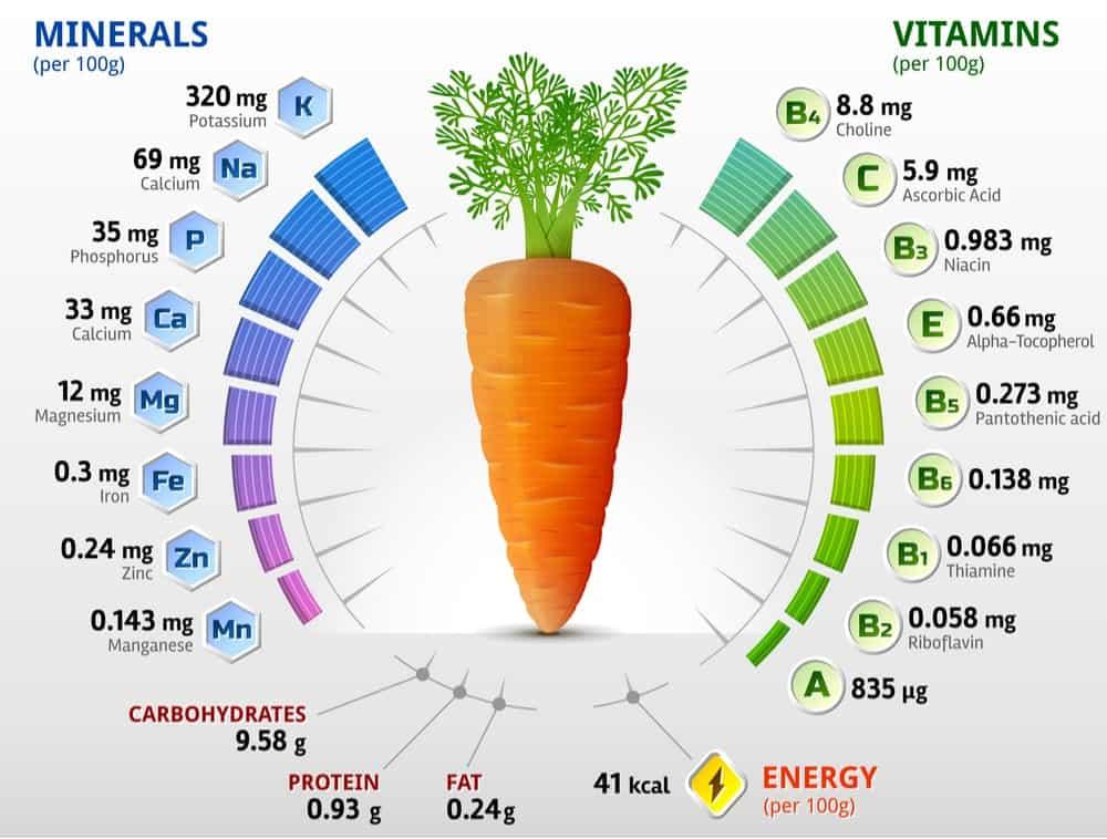 Can gerbils eat carrots